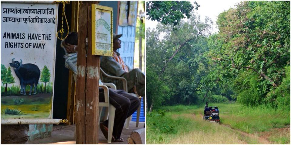Tijgers spotten in India