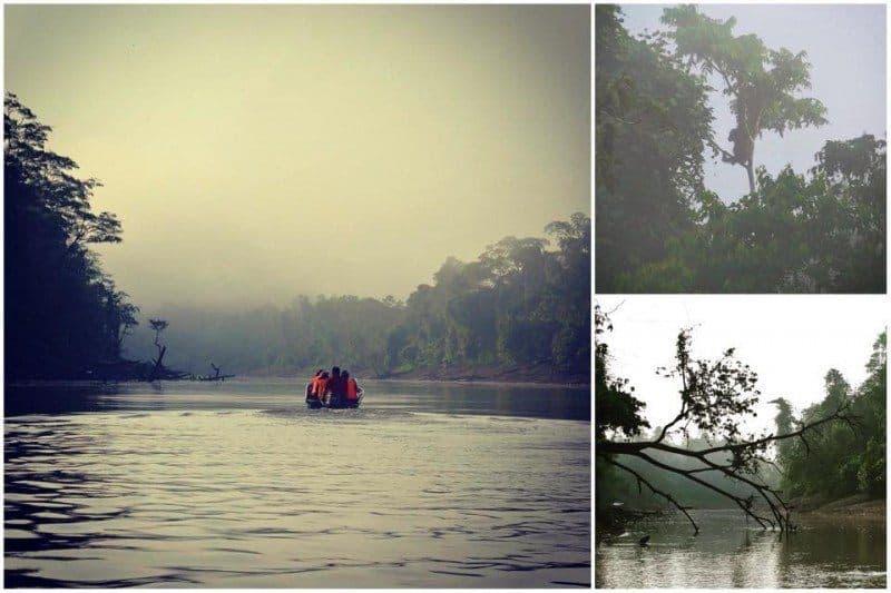 Orang oetan Borneo