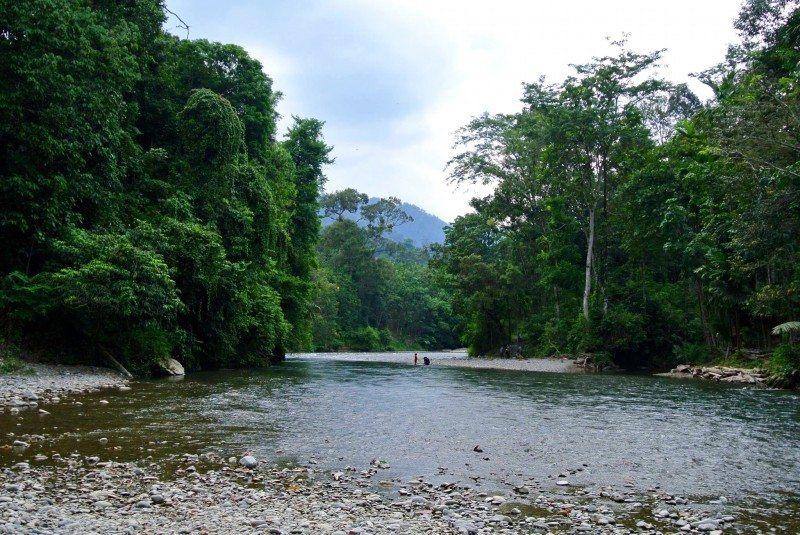 Orang-oetans Sumatra