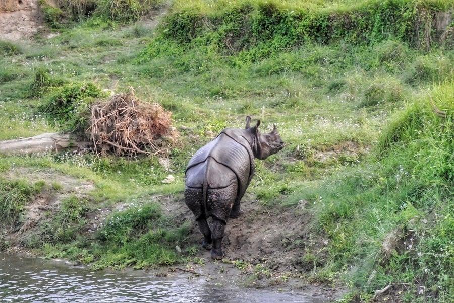 Chitwan of Bardia