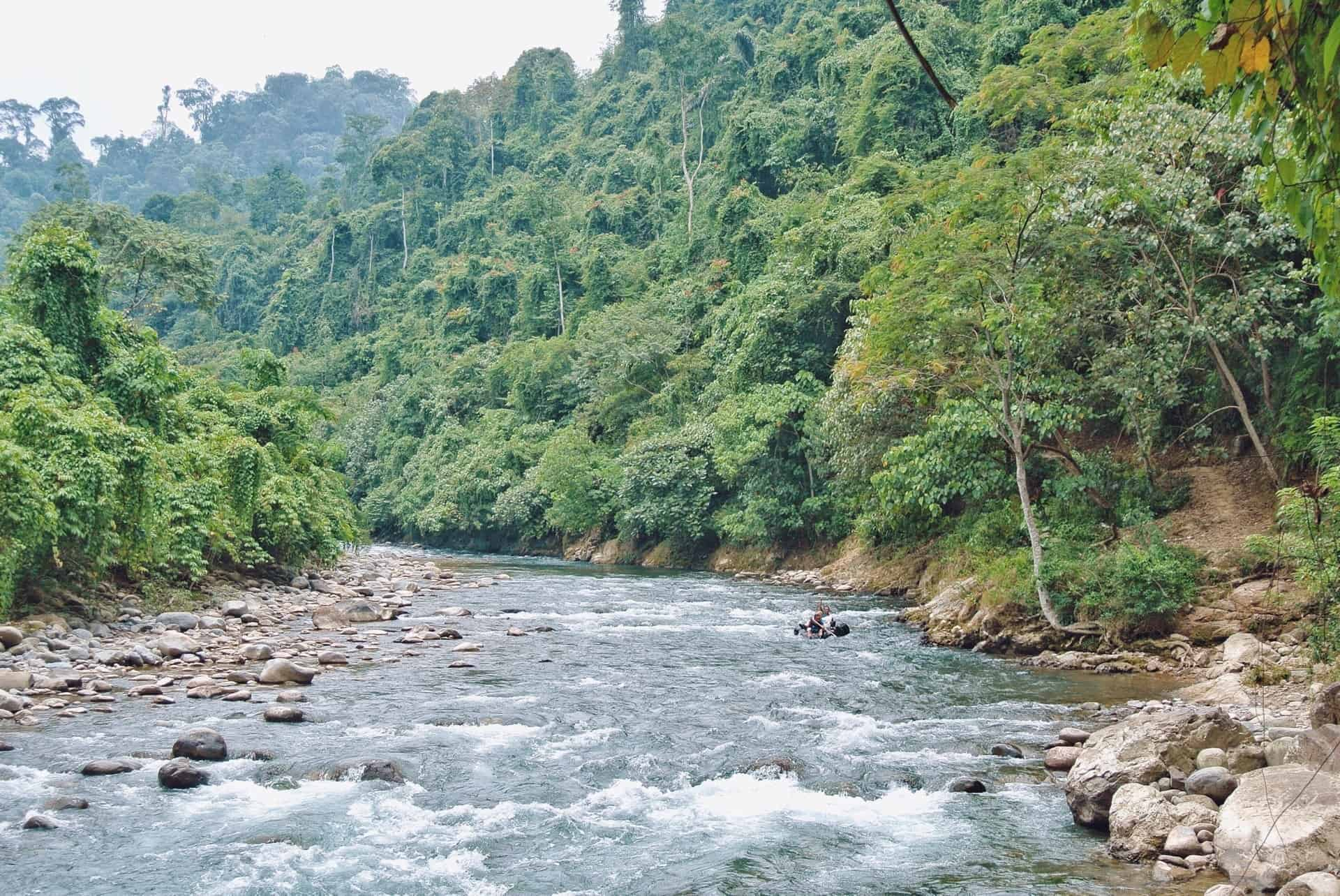 Jungle Trekking Bukit Lawang