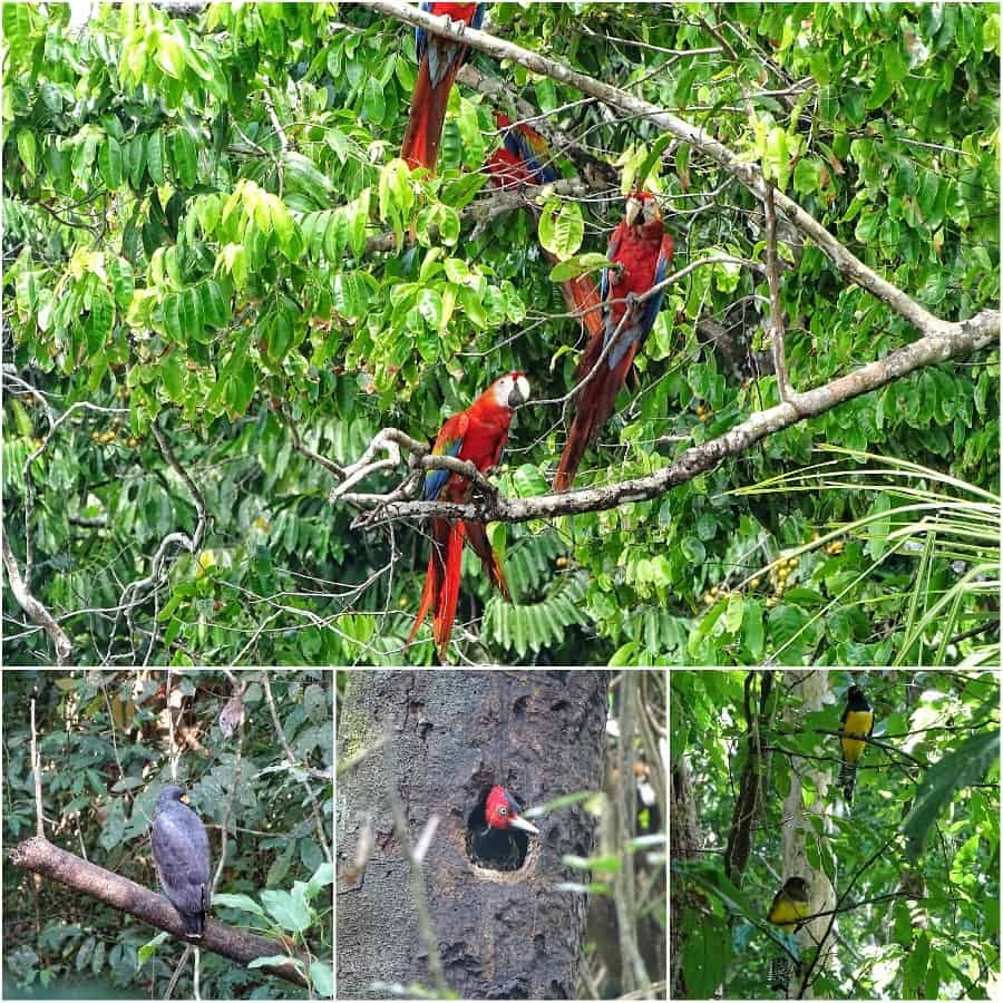 Corcovado National Park wildlife
