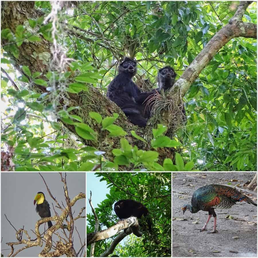 wildlife Tikal Guatemala