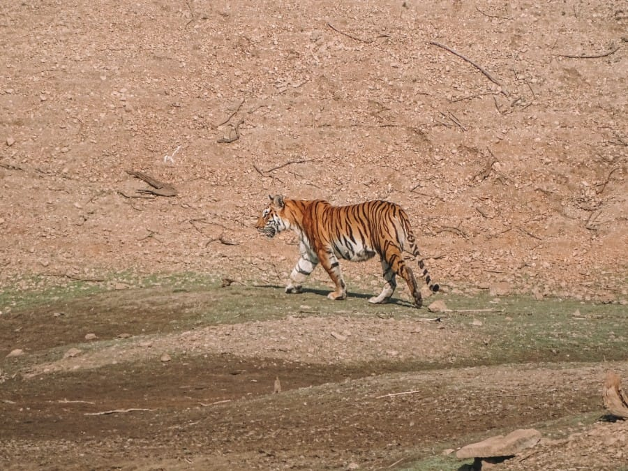 tips Pench National Park