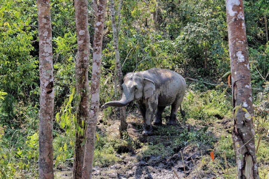 diervriendelijke olifantenopvang Thailand