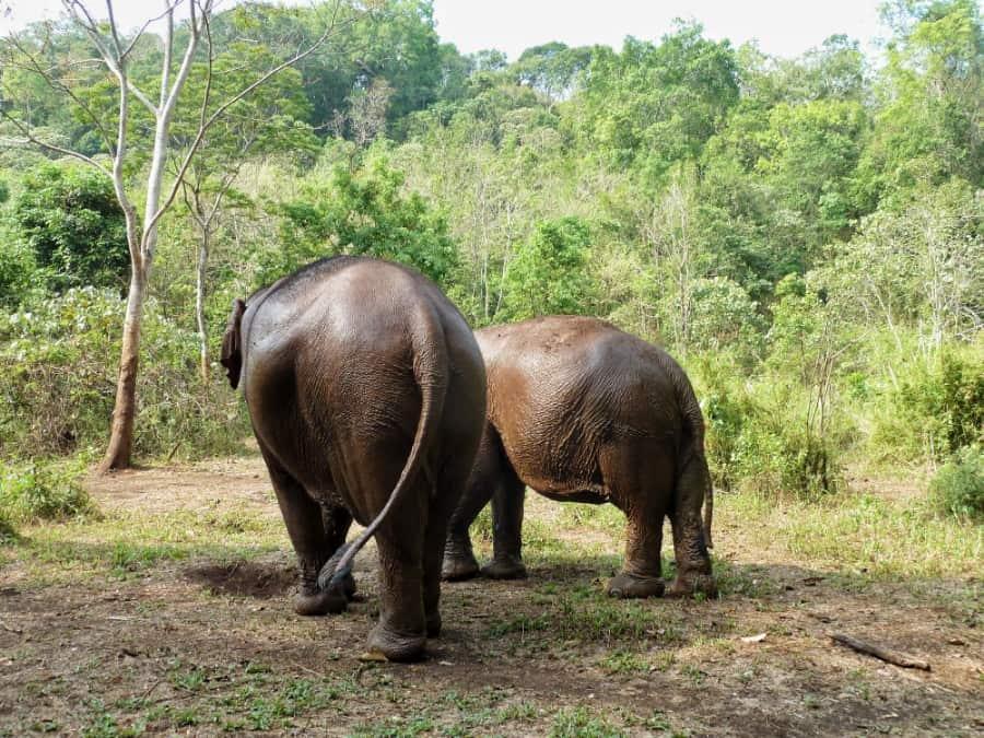olifantenopvang Thailand