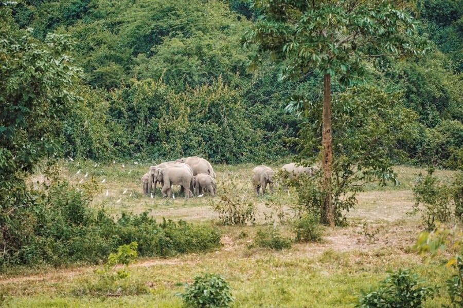 olifanten in het wild thailand