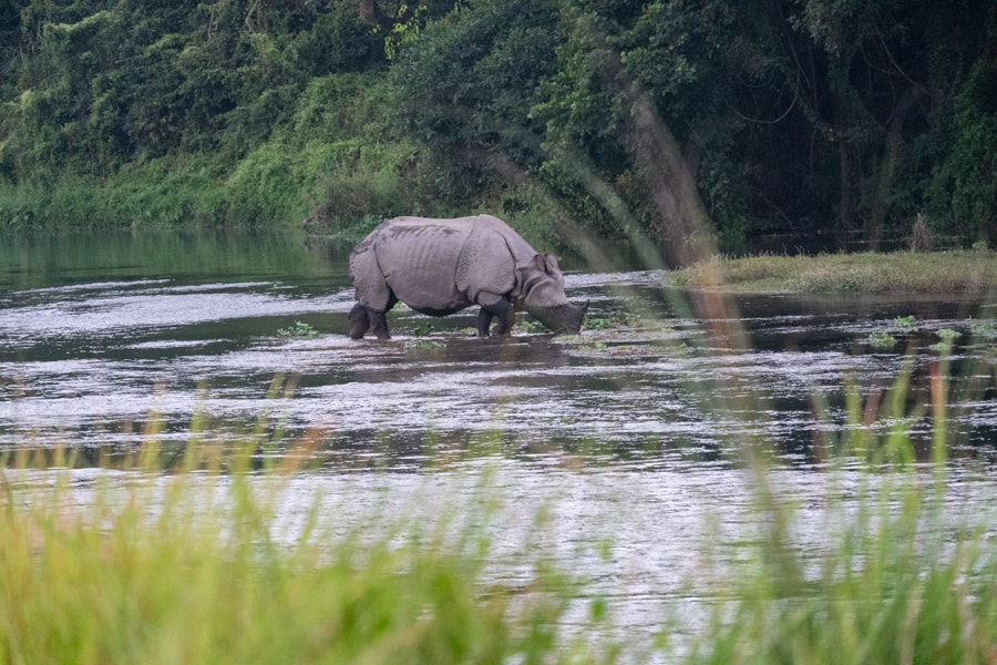 neushoorn nepal