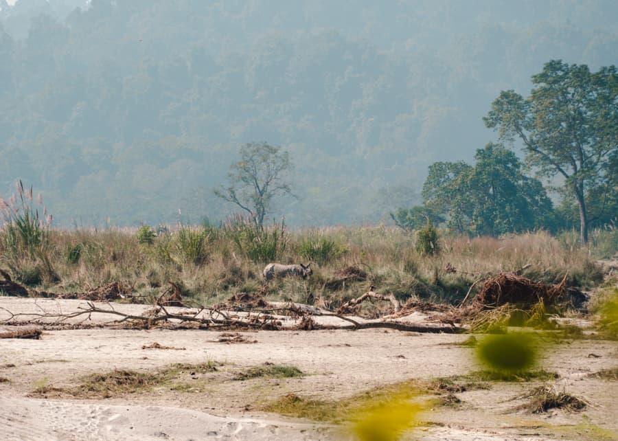 neushoorn chitwan