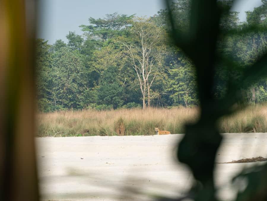 tijger nepal