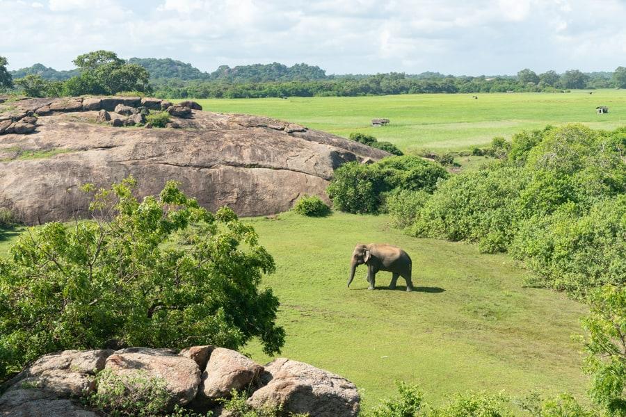 olifanten arugam bay