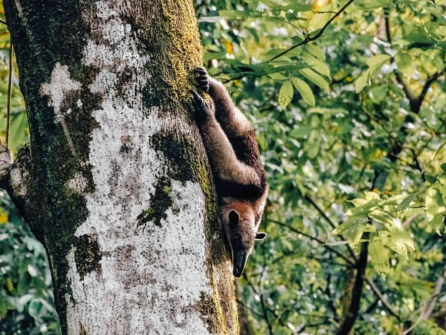 bestemming wildlife