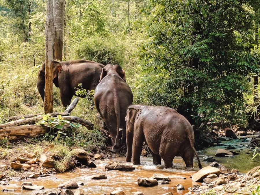 wildlife bestemming