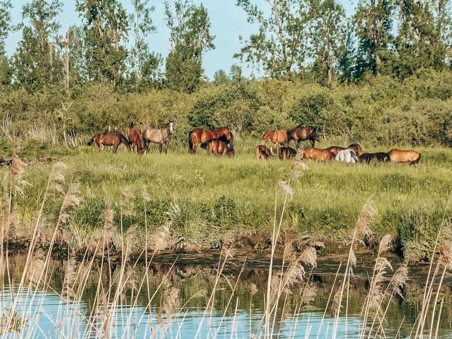 avontuur dichtbij biesbosch